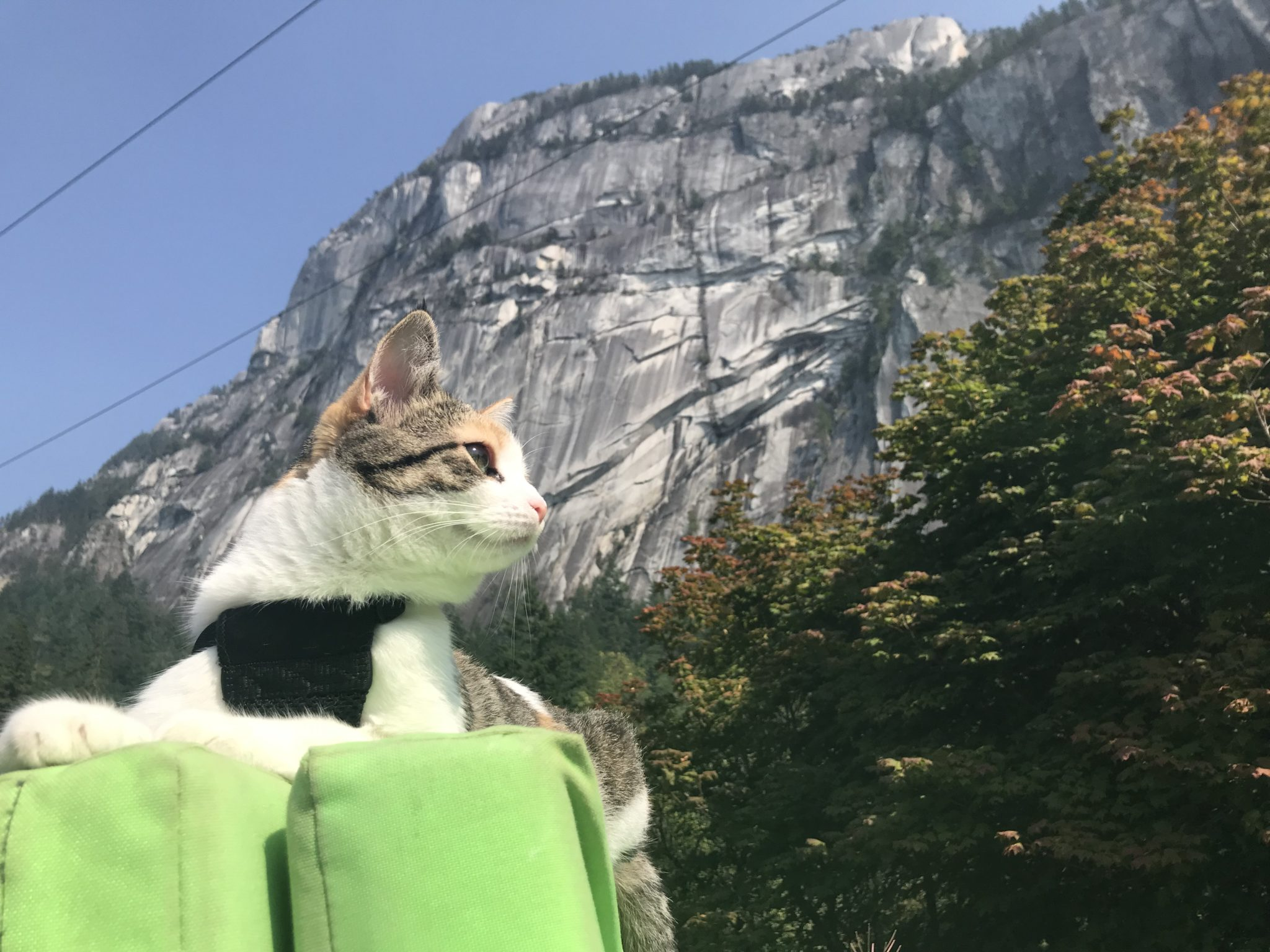 Cali is right at home in the meowntains.