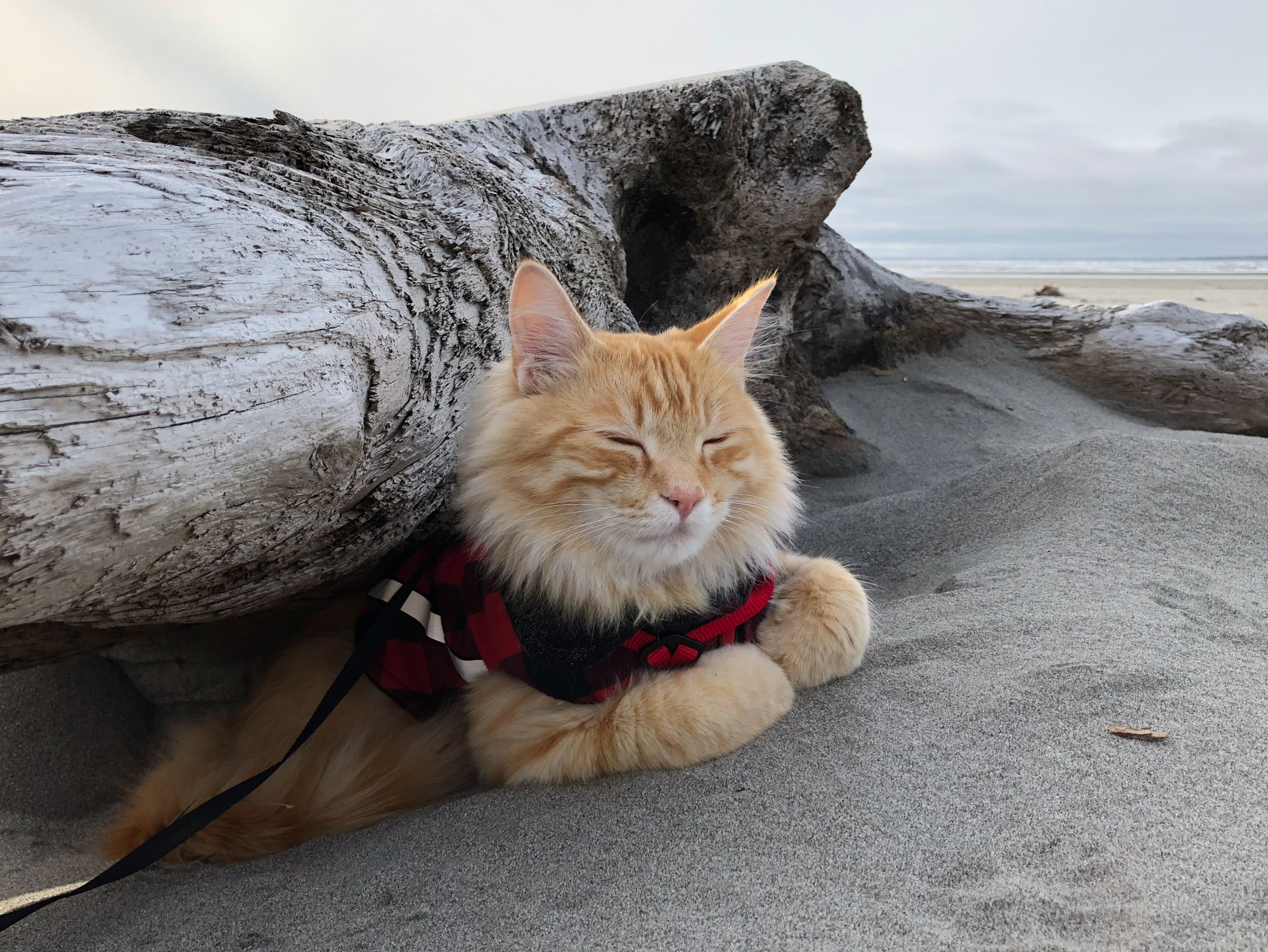 Leon adventure cat naps on beach