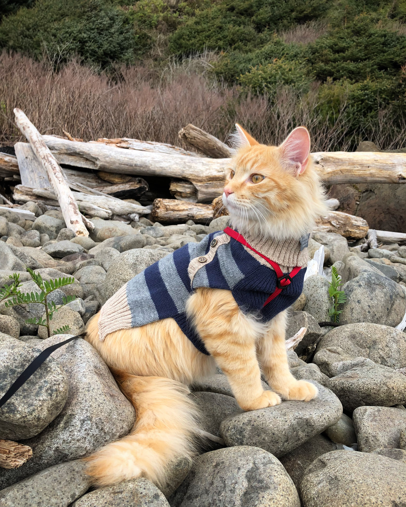 cat in sweater poses on rocks