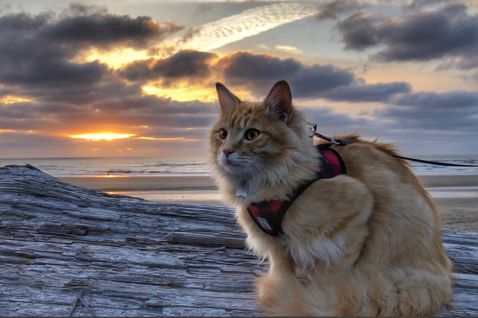 adventure cat on beach at sunset