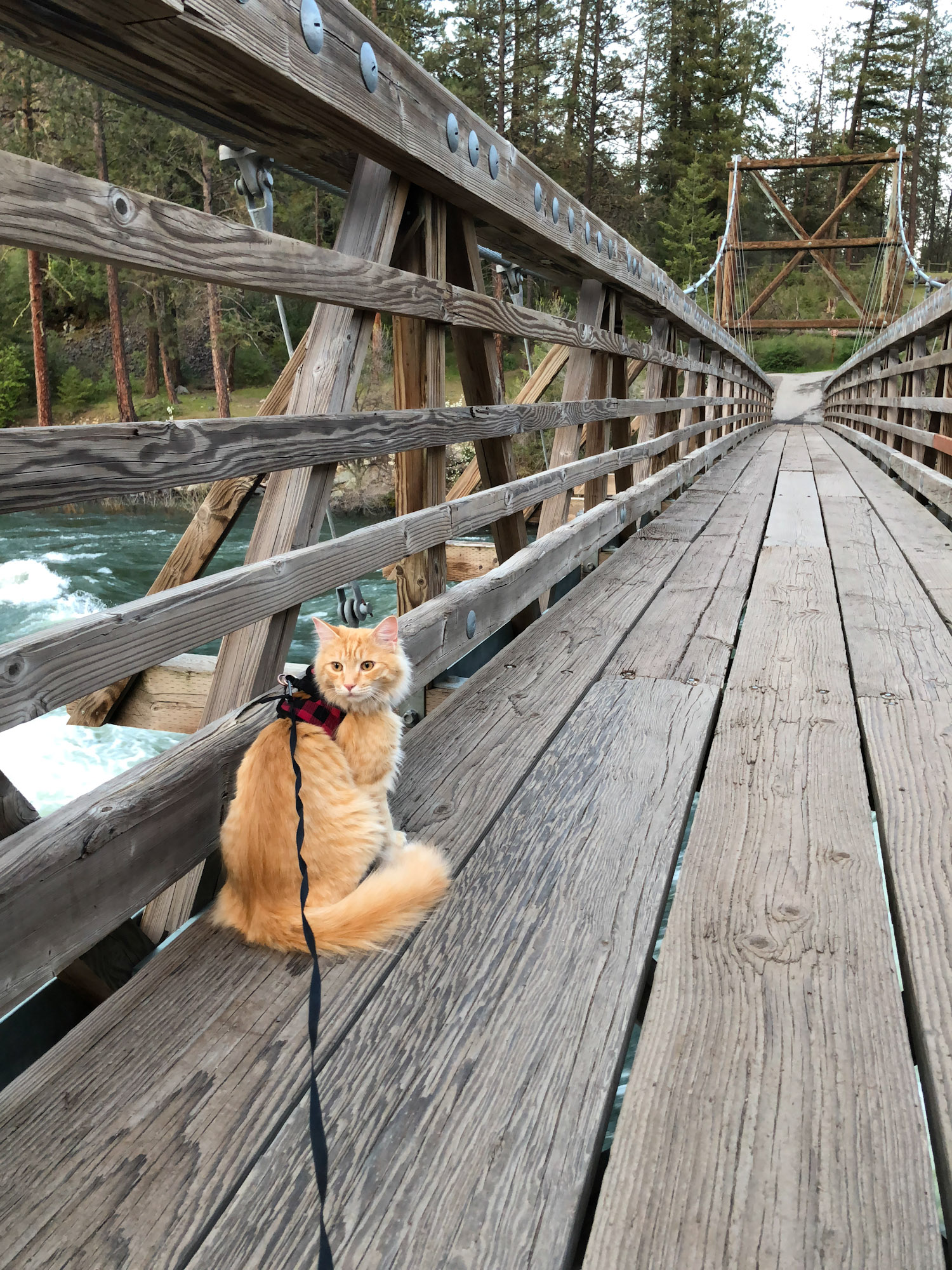 adventure cat sits on bridge