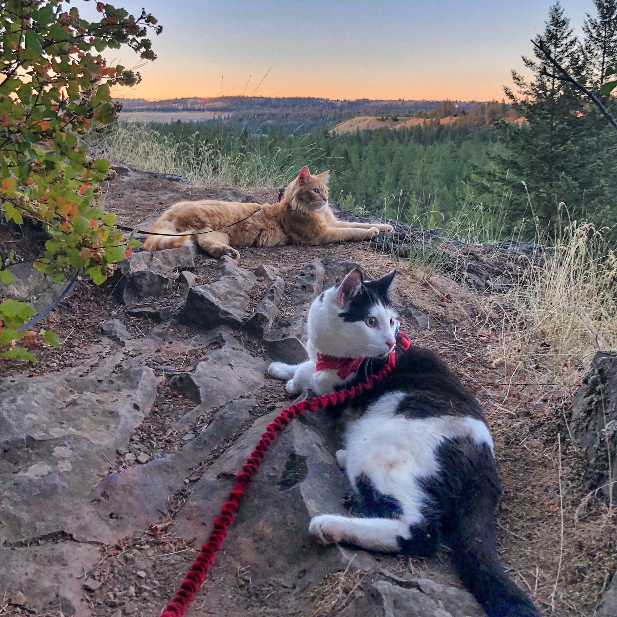 two adventure cats rest after a hike