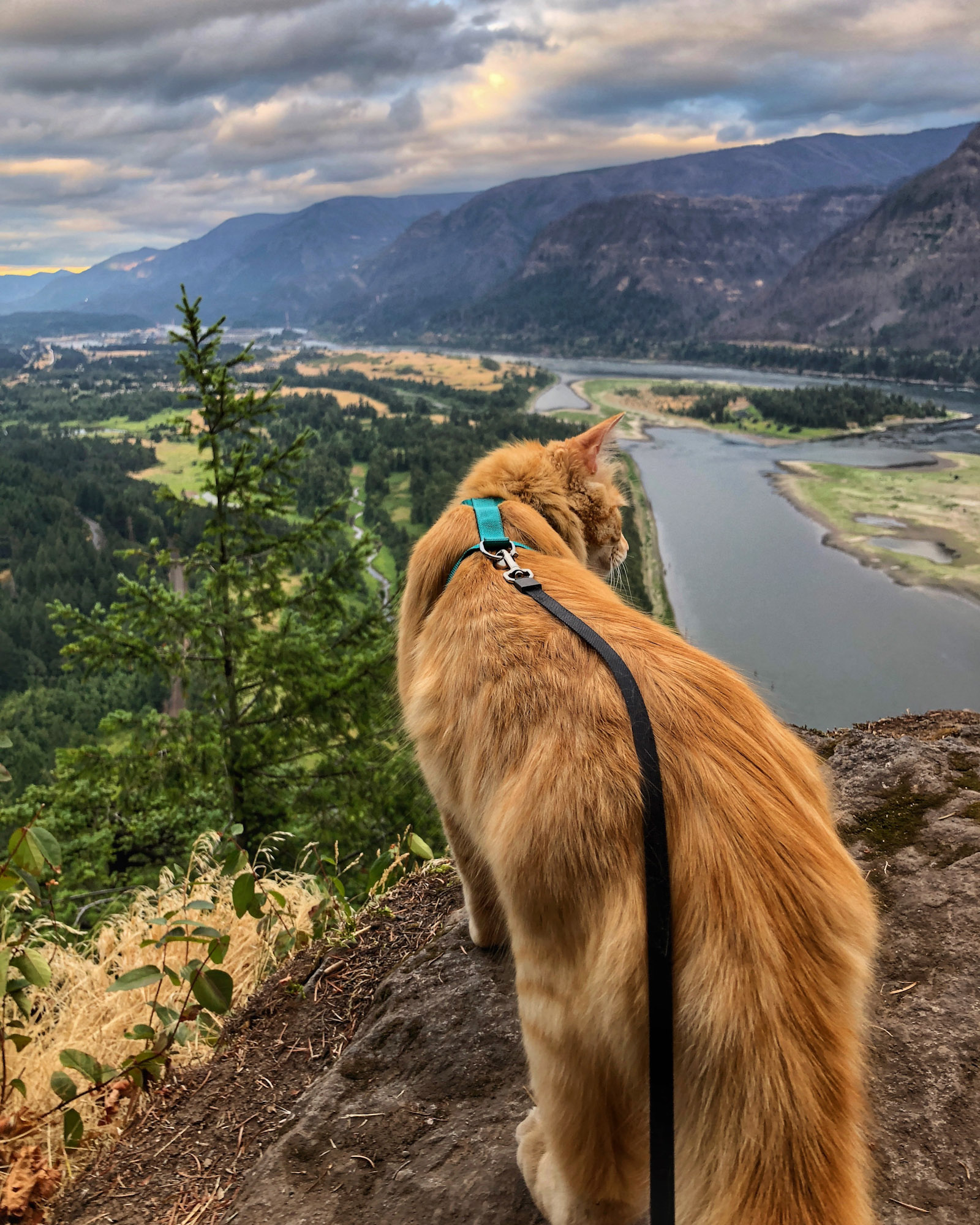 adventure cat overlooks mountain view