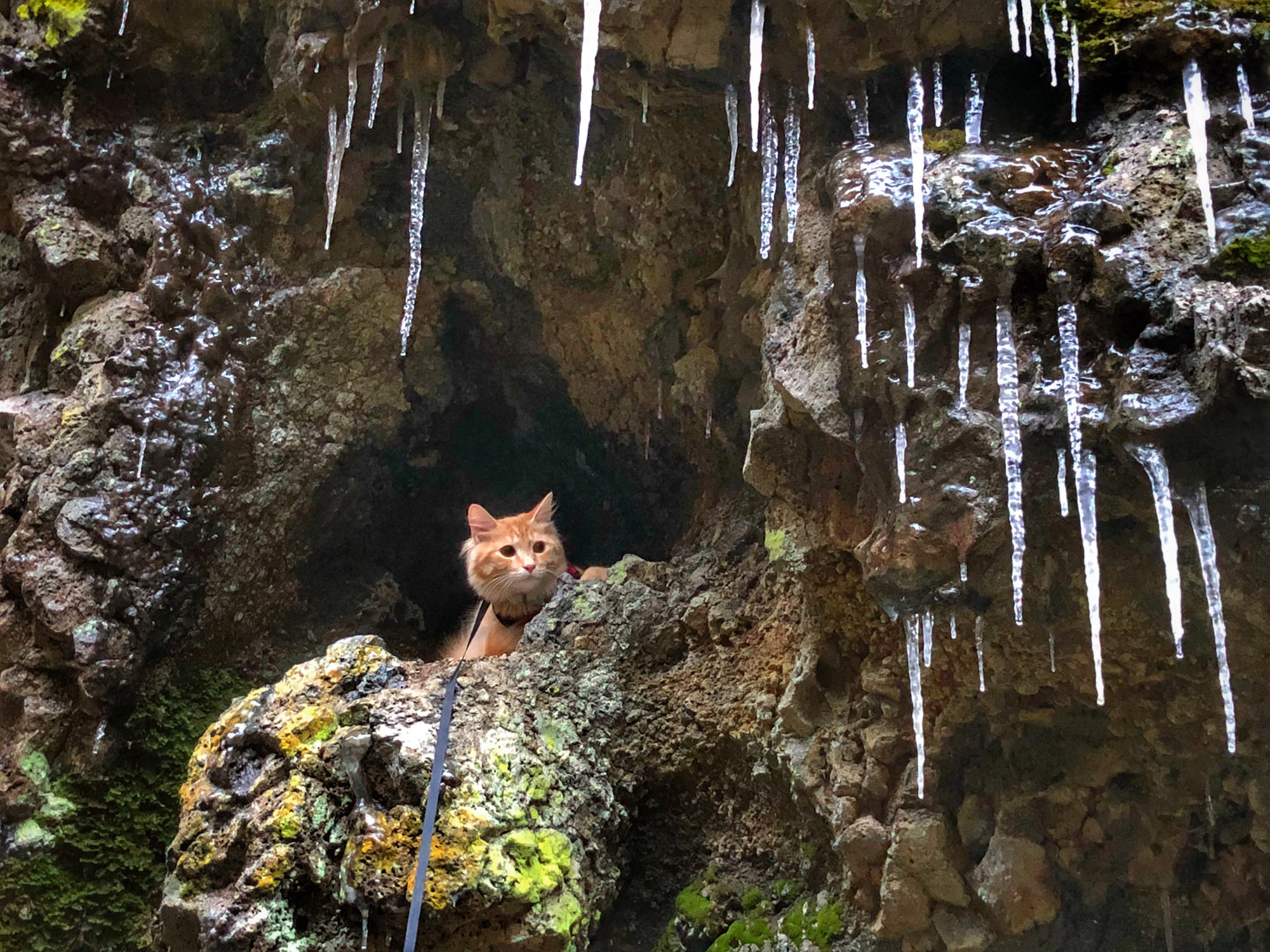 adventure cat poses beside icicles