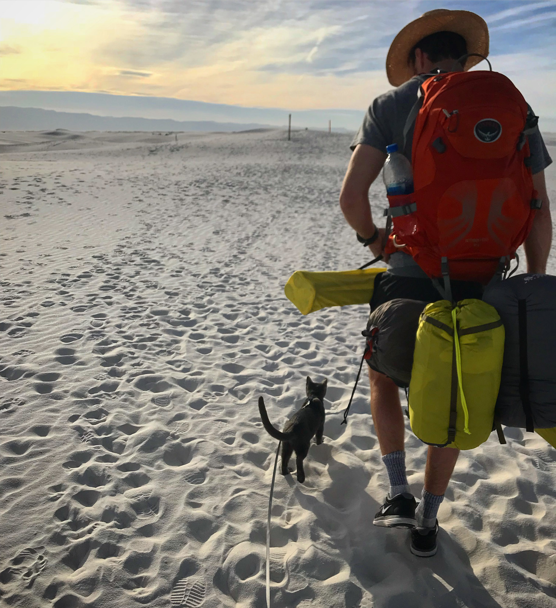 cat on harness walks through sand with owner