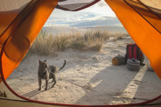 Walt the adventure cat outside of tent in desert
