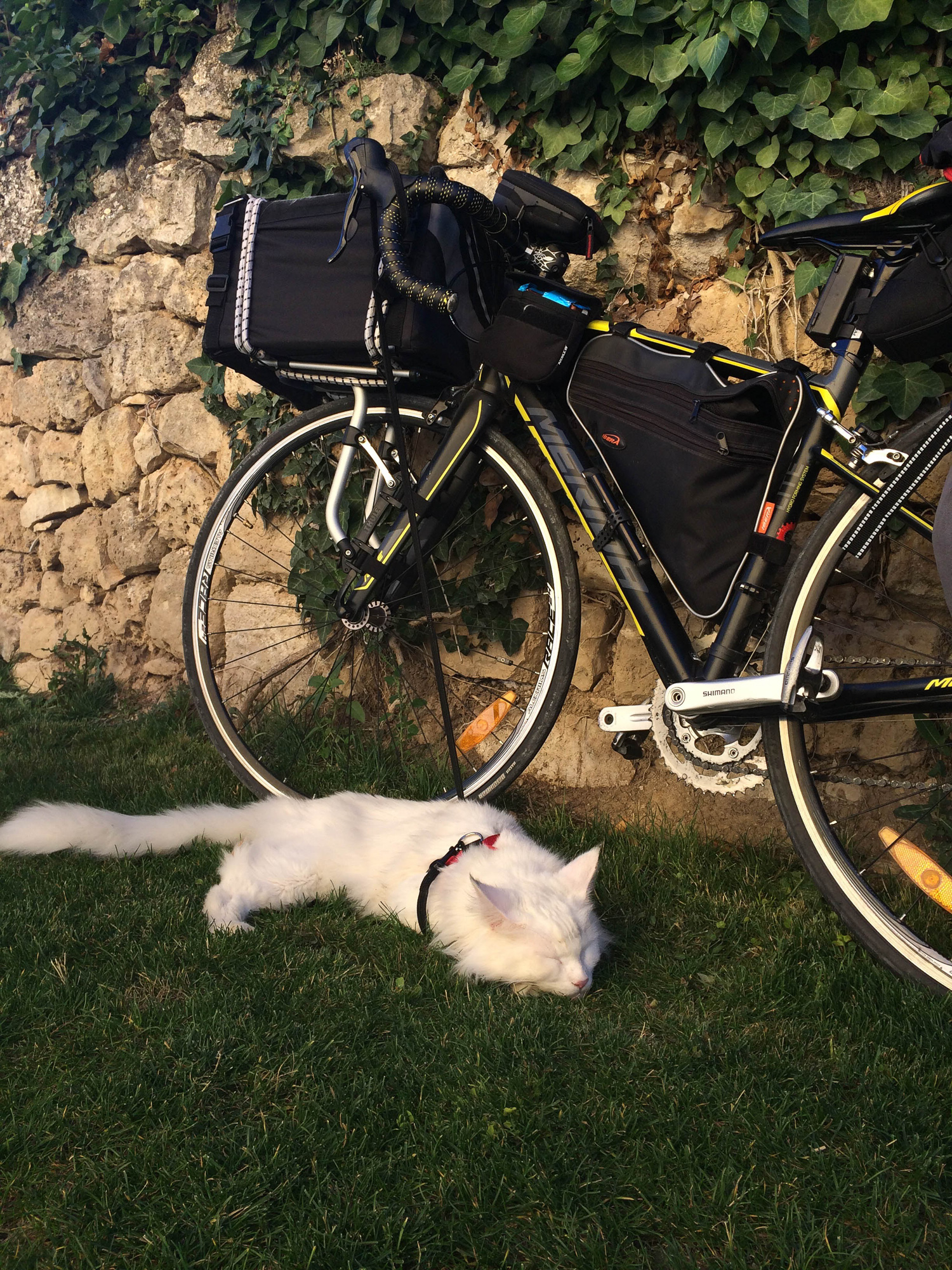 Nothing like a cat nap after a long day of bike riding in Spain! (Photo: Instagram/@cezars.crew)