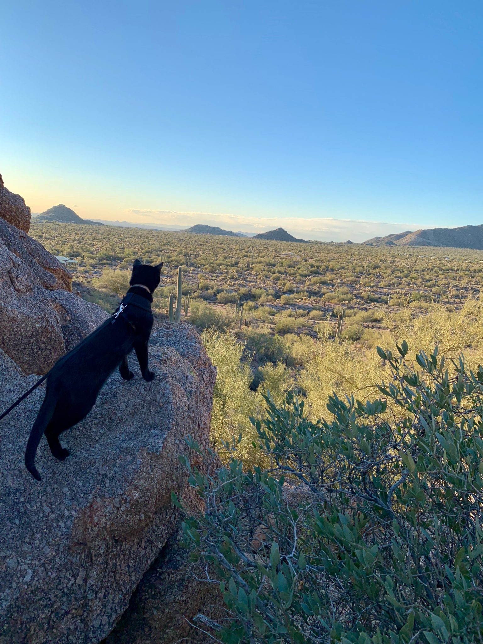 Cash adventure cat overlooks Sonoran Desert