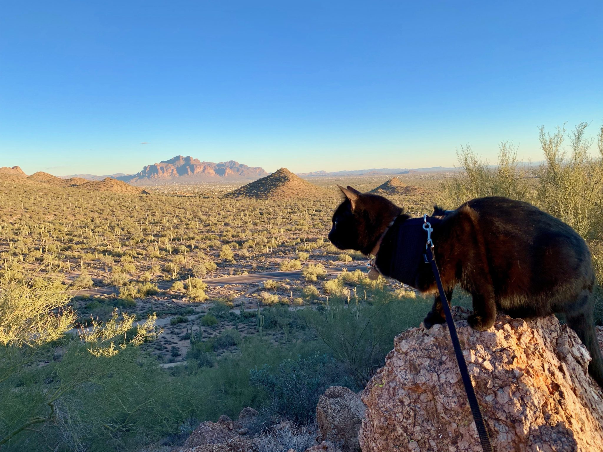 black adventure cat overlooks Arizona landscape