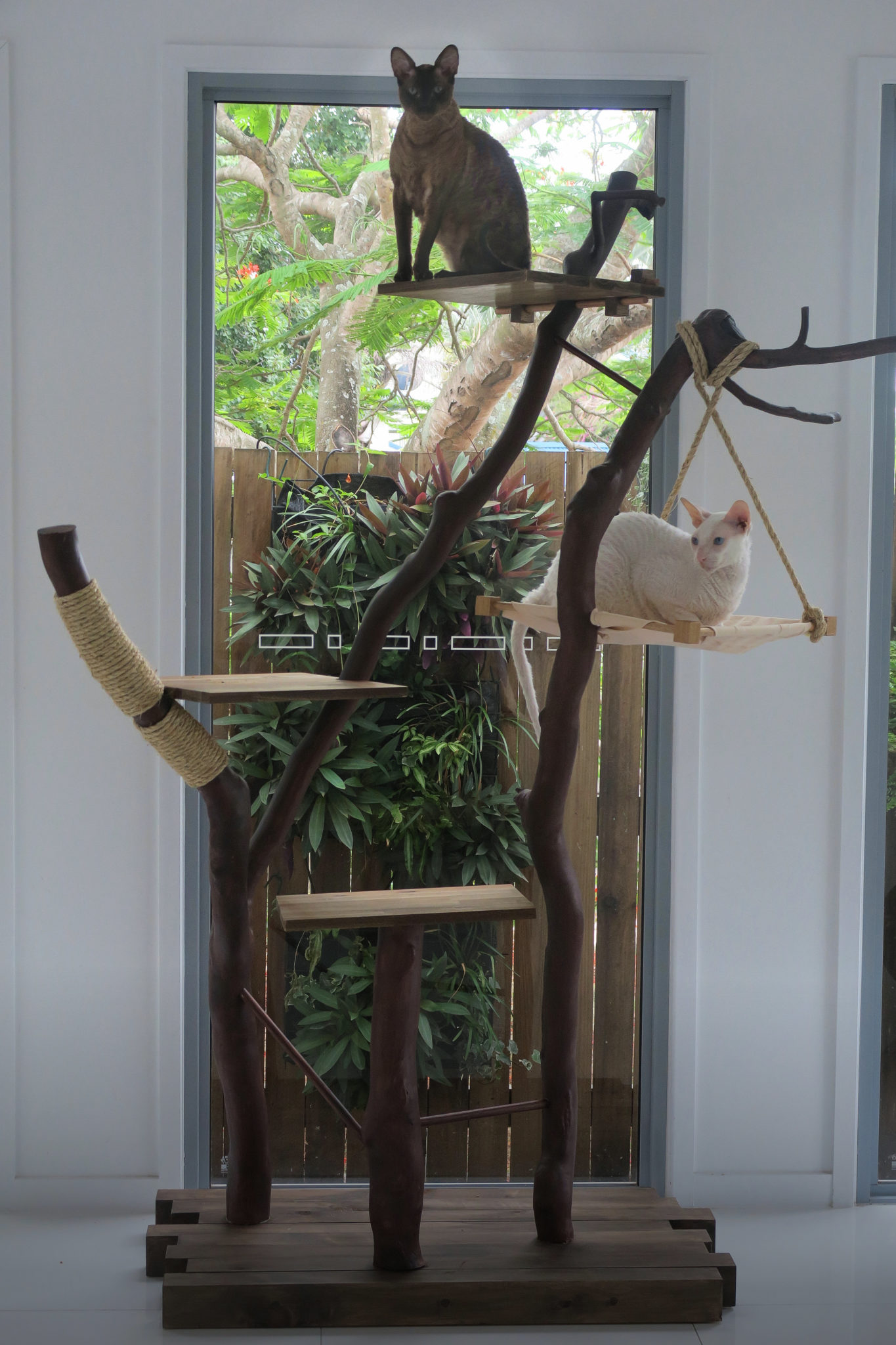 Gandalf and Radagast perch in their beautiful homemade cat tree made from native Australian wood