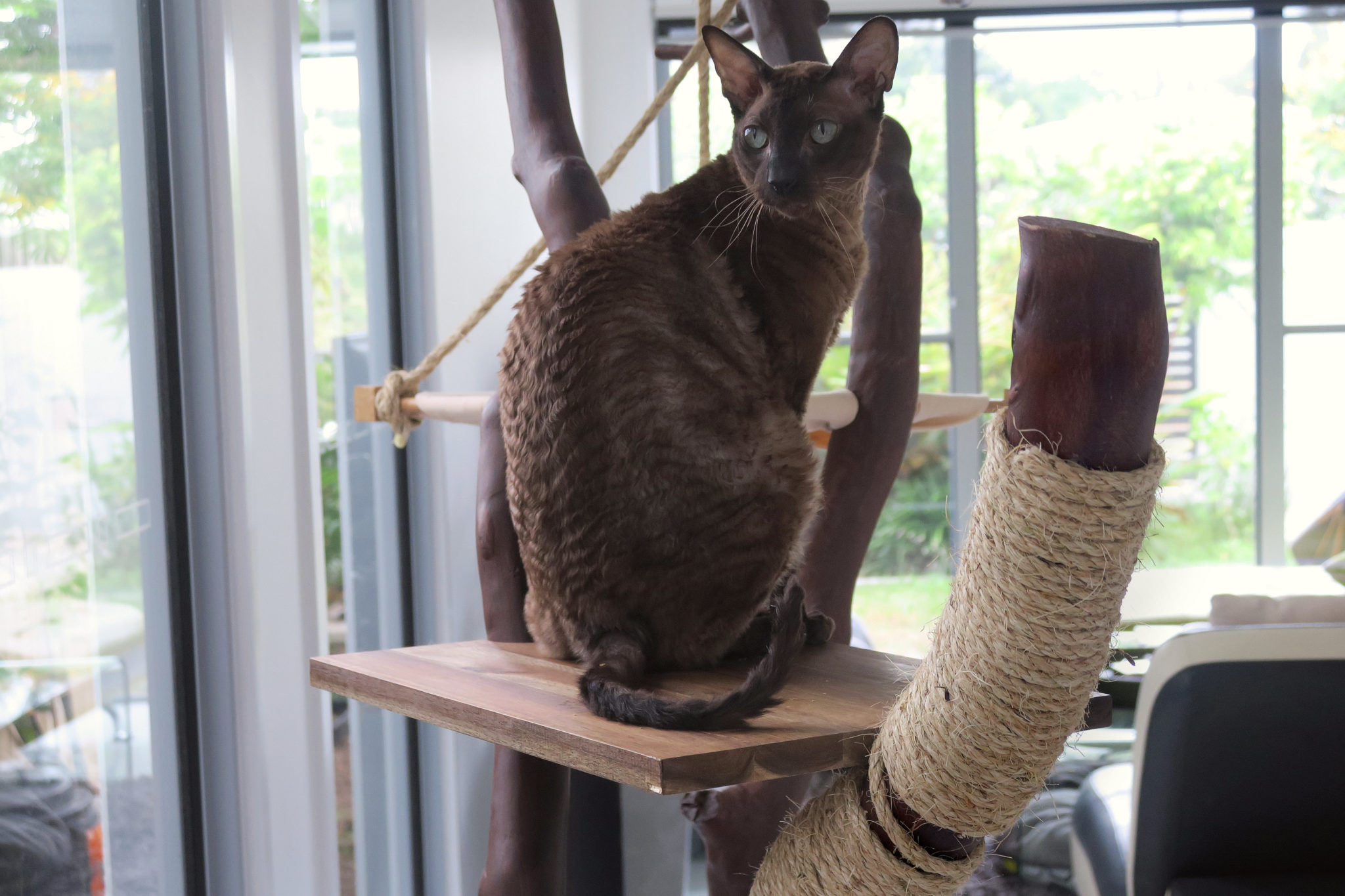 Radagast the Brown cat sits on platform of homemade cat tree