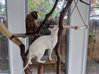 DIY cat tree made from found wood