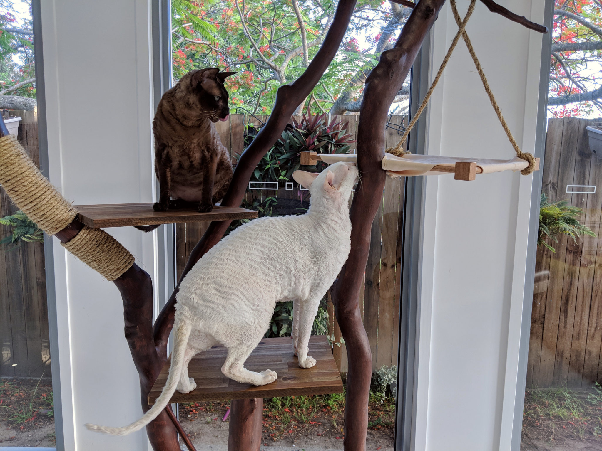 This Diy Cat Tree Is Truly A Work Of Art Adventure Cats