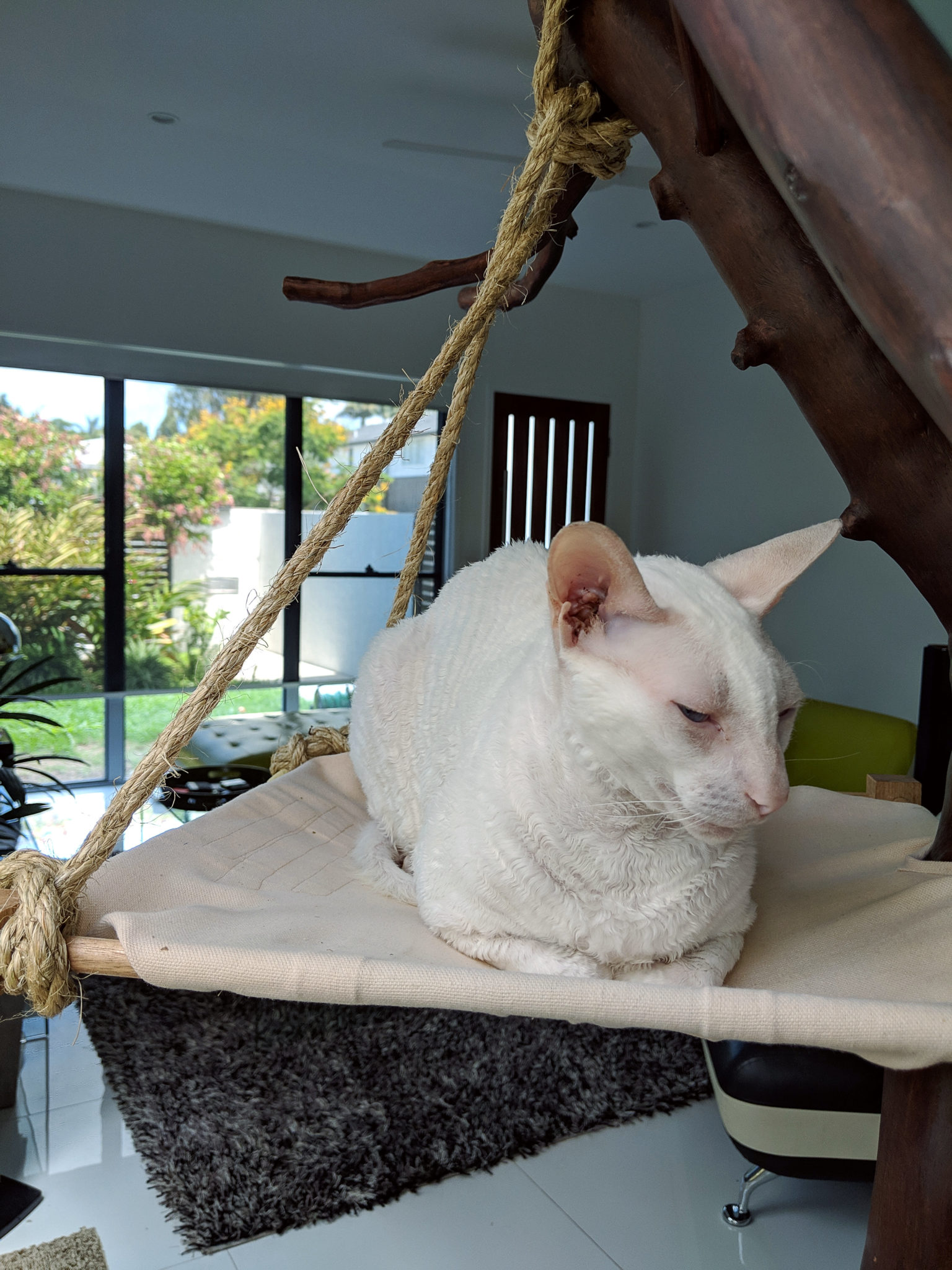 Gandalf takes a catnap in his homemade cat tree