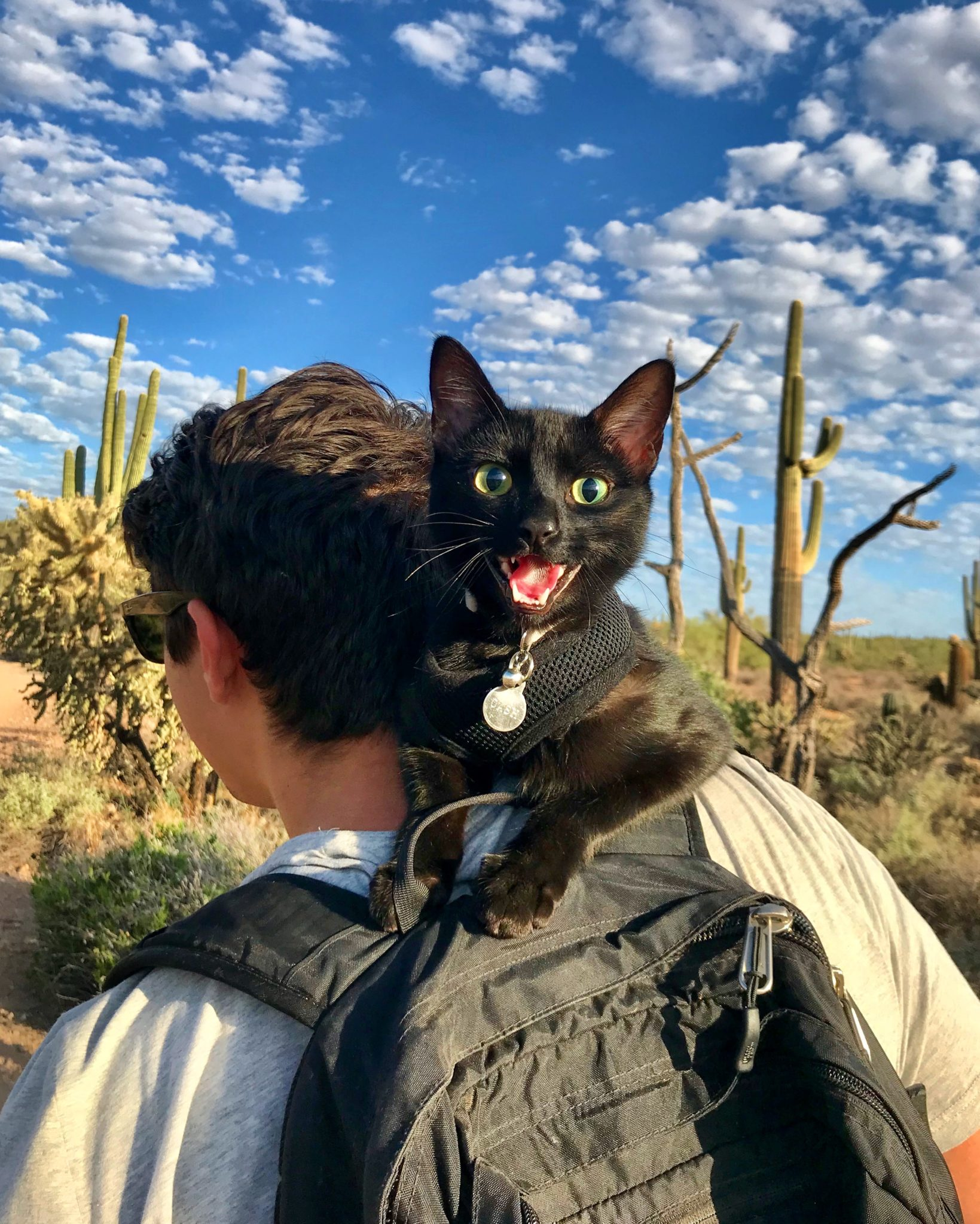 Cash the adventure cat meows on owner's shoulder