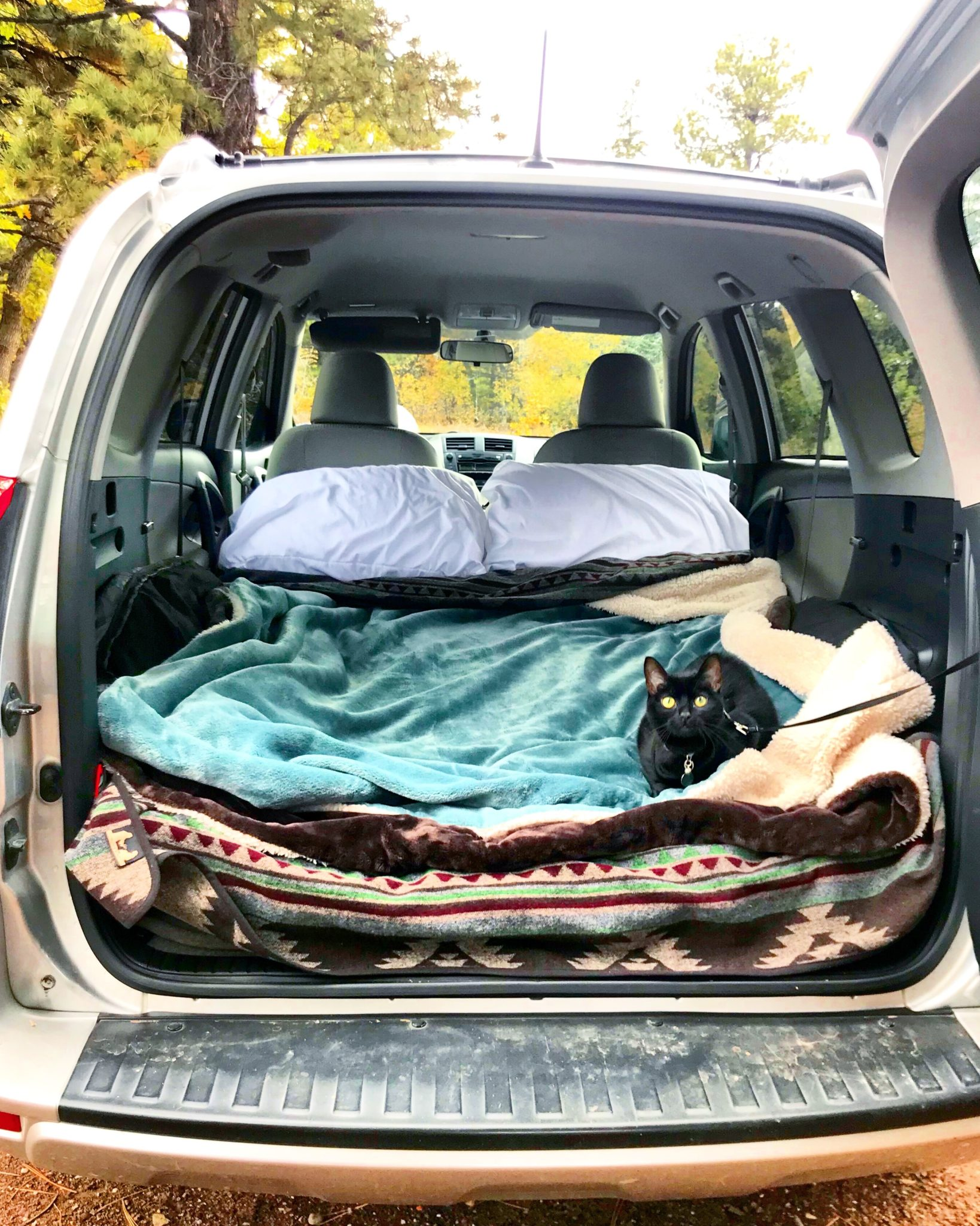 adventure cat camps in back of vehicle