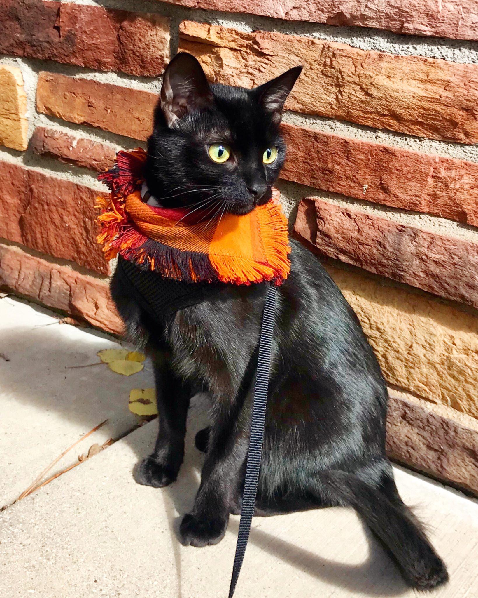 Cash adventure cat wearing flannel scarf