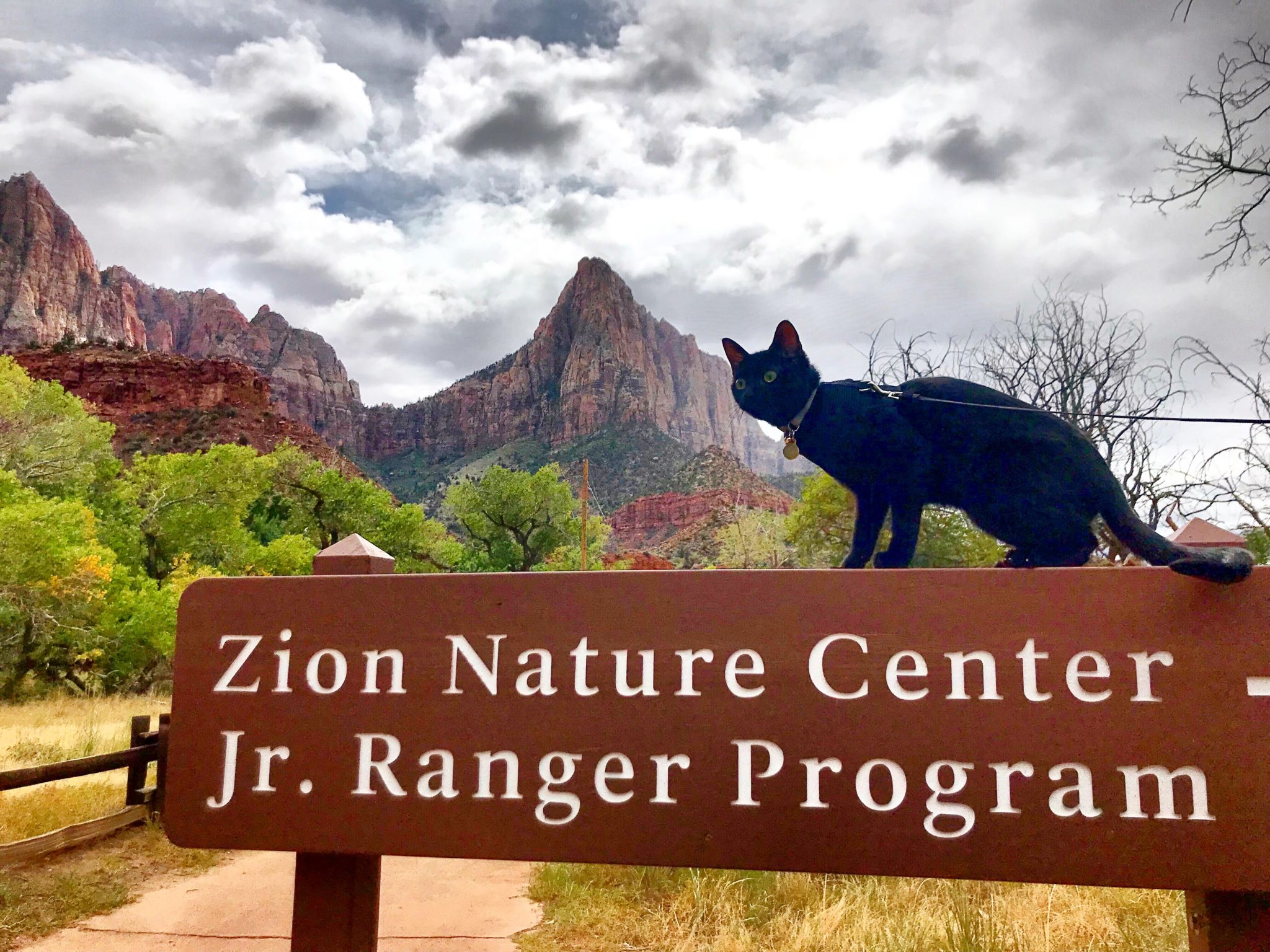 Cash adventure cat explores Zion National Park on a leash
