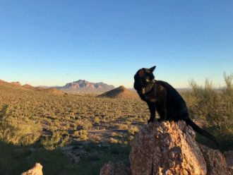 Cash the black adventure cat overlooks Arizona desert landscape