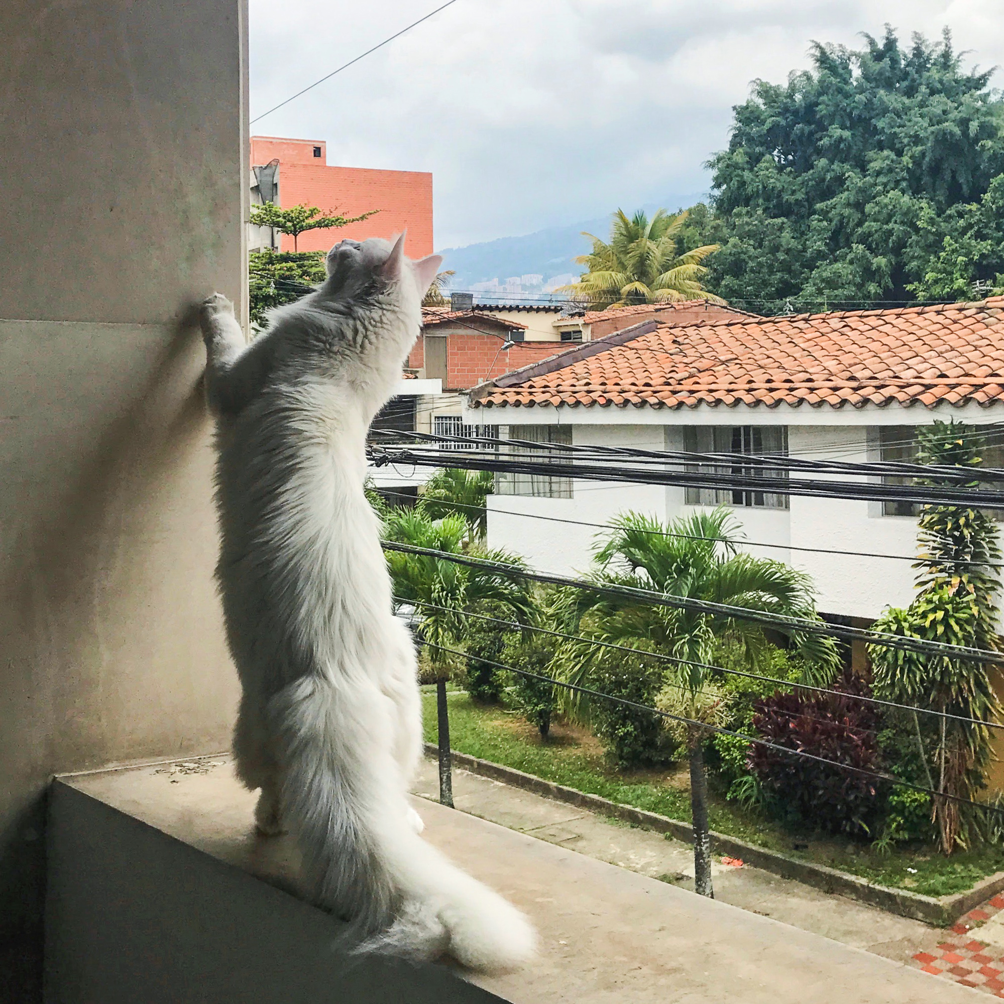 Cezar stretches out in Medellin, Colombia. (Photo: Instagram/@cezars.crew)