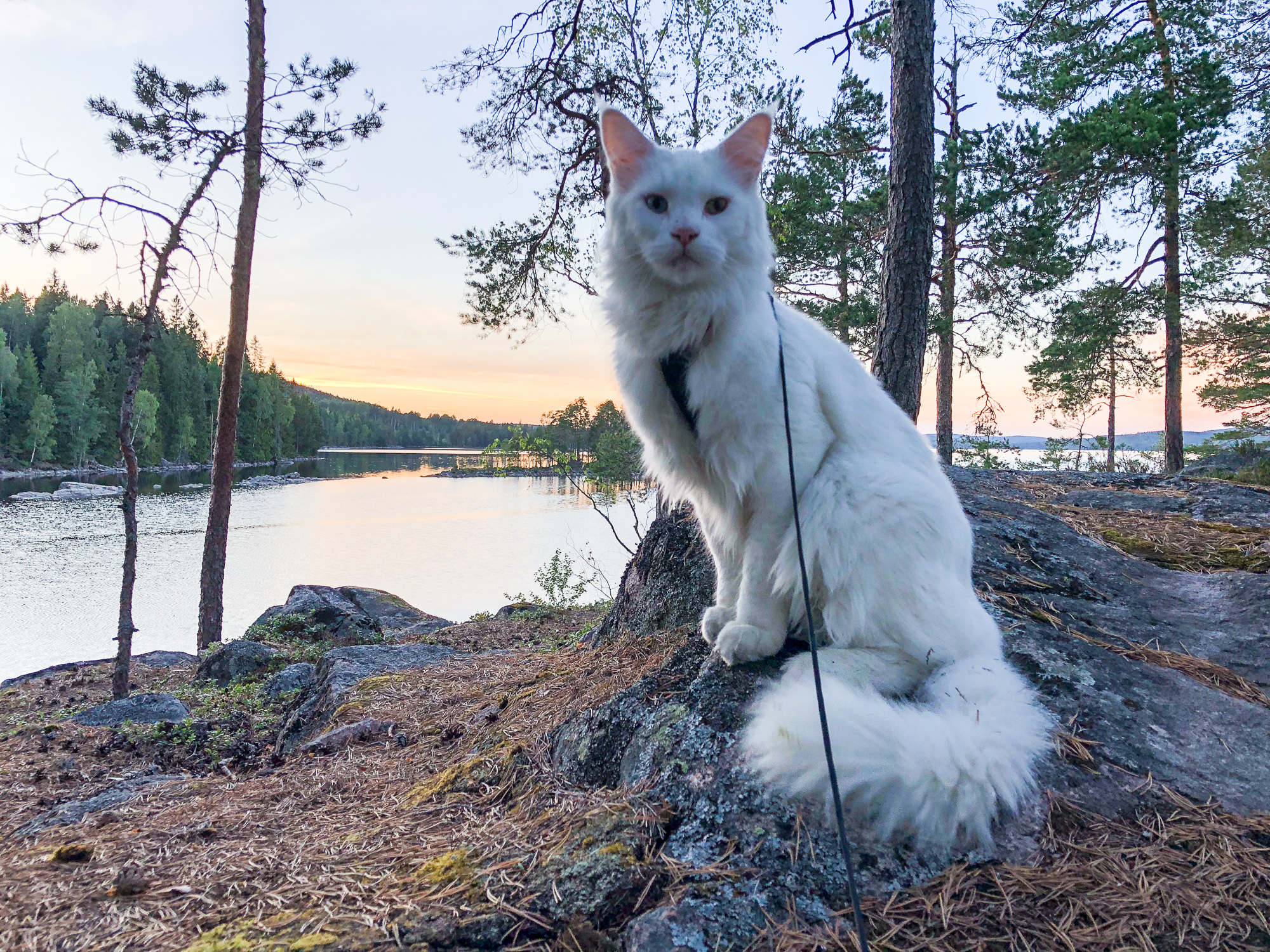 Regal Cezar poses by the water in his home country of Sweden. (Photo: Instagram/@cezars.crew)