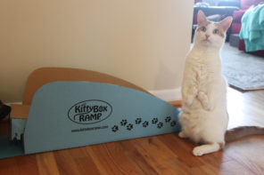 Disabled cat with litter box ramp