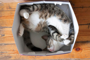 happy tabby cat curled up in cardboard box