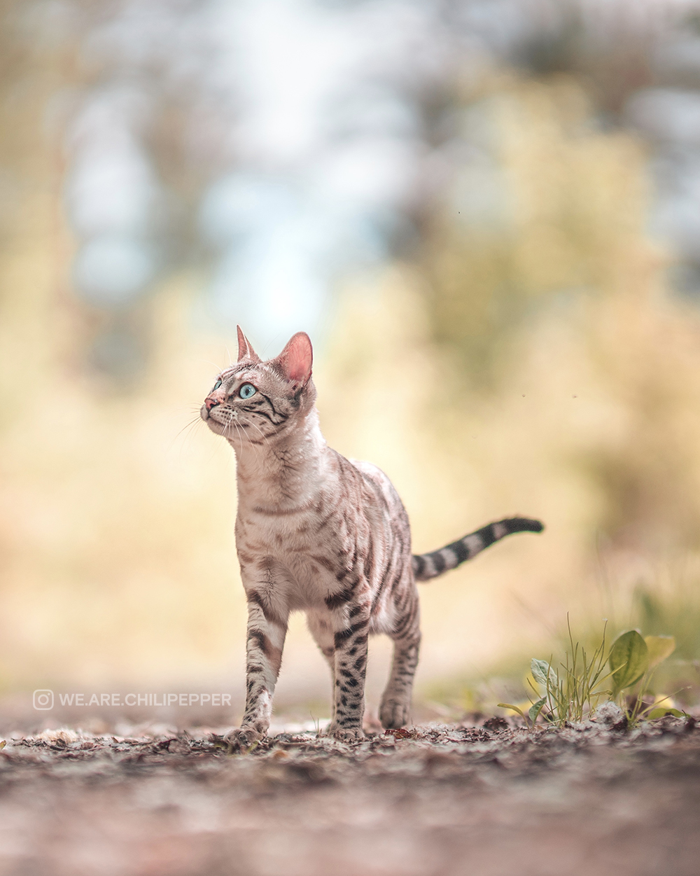 A cat in the outdoors