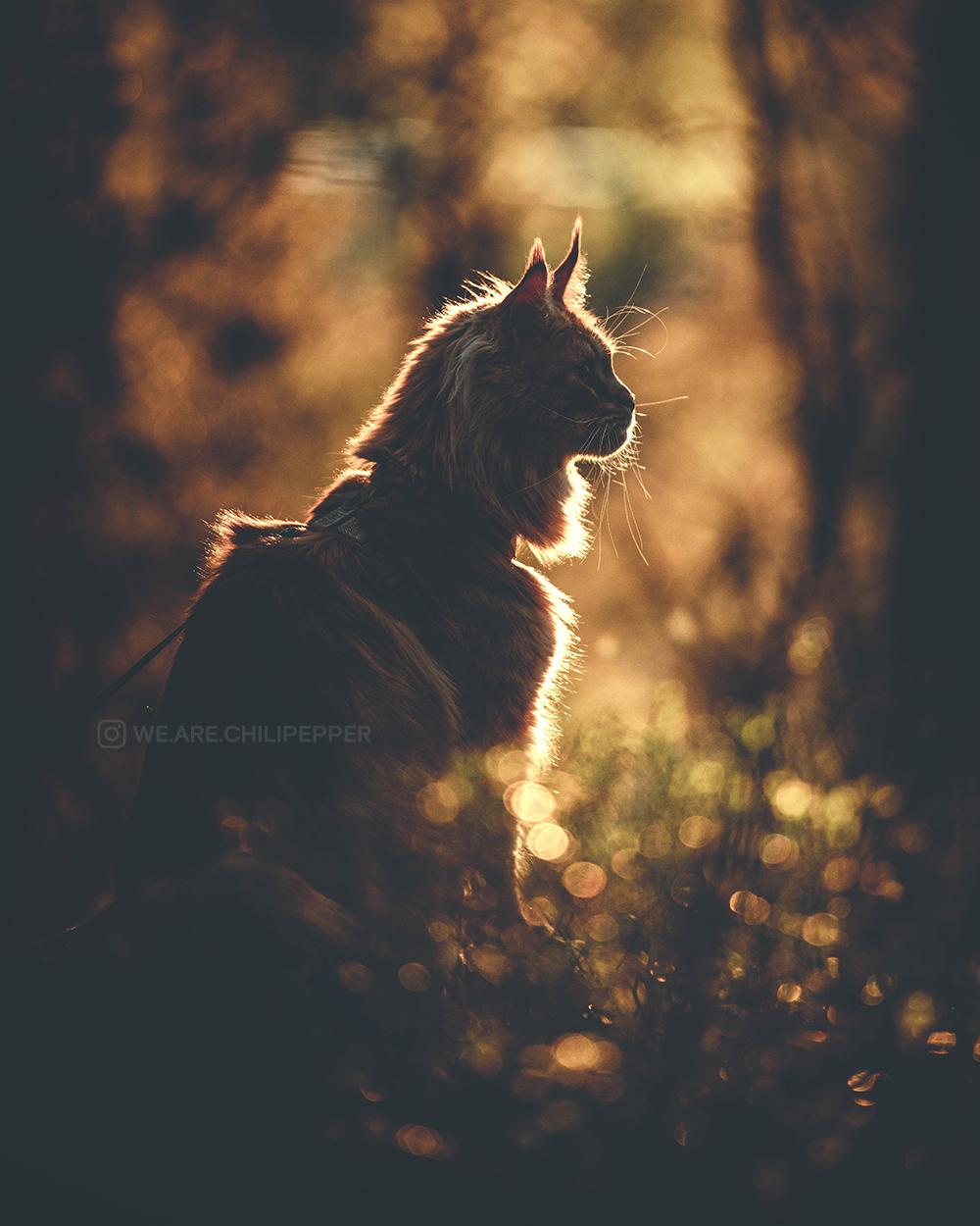 cat in profile outside