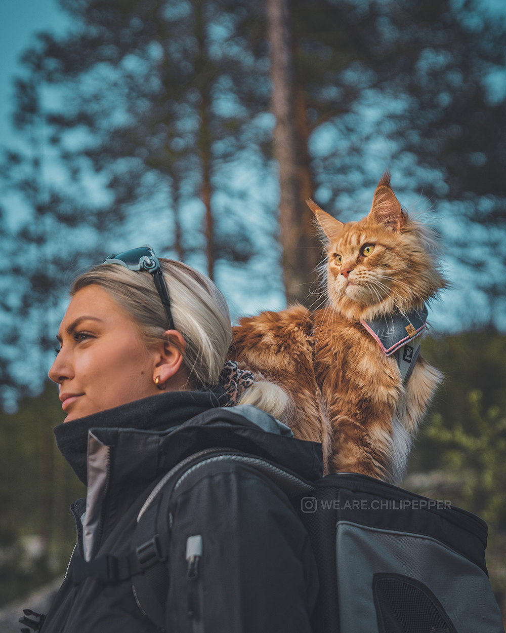 cat and person hike