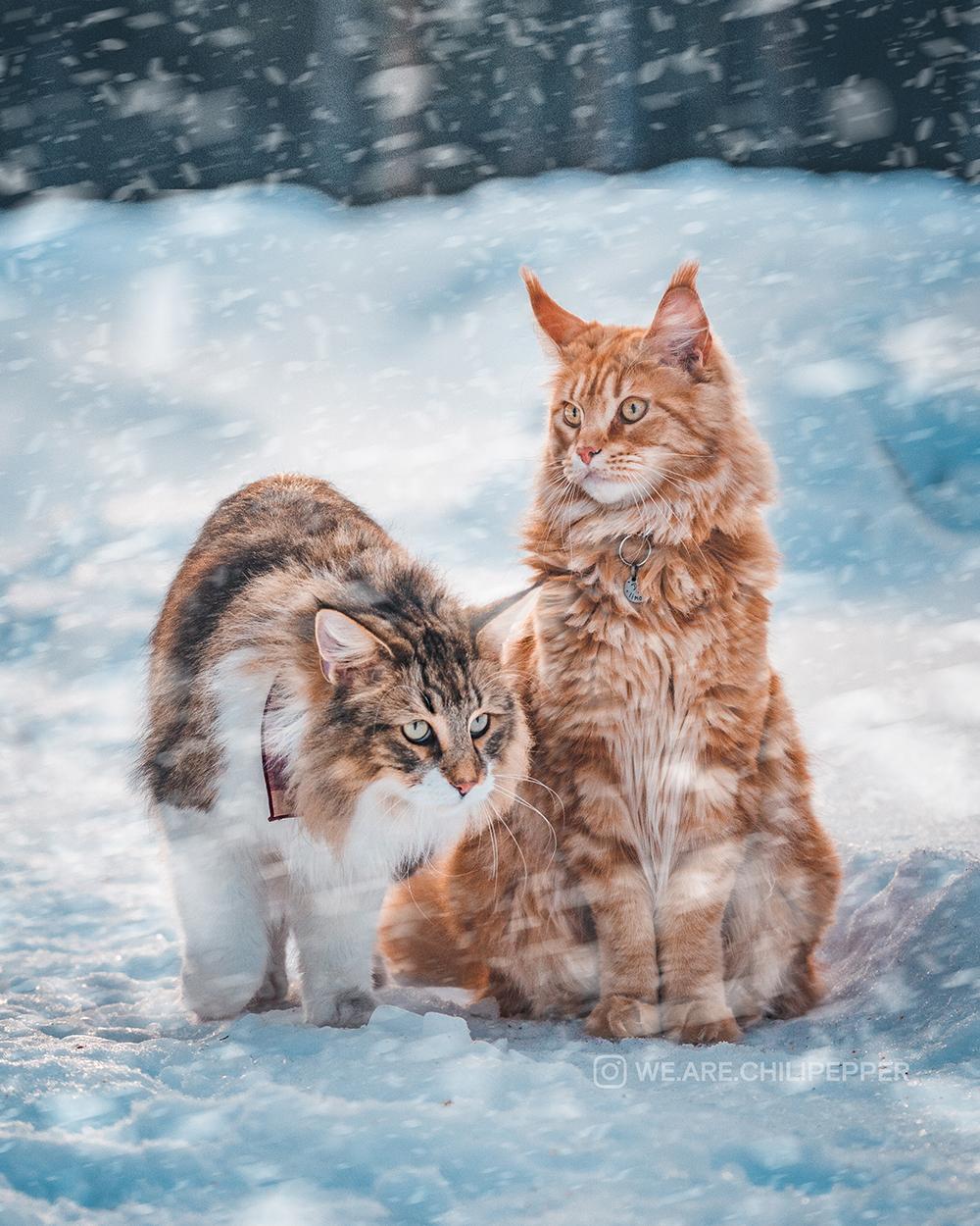 pretty cat in snow