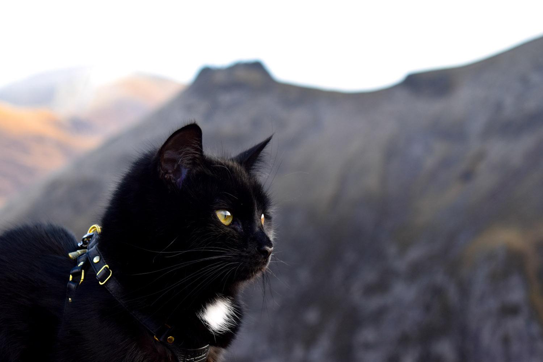 Mila mountain