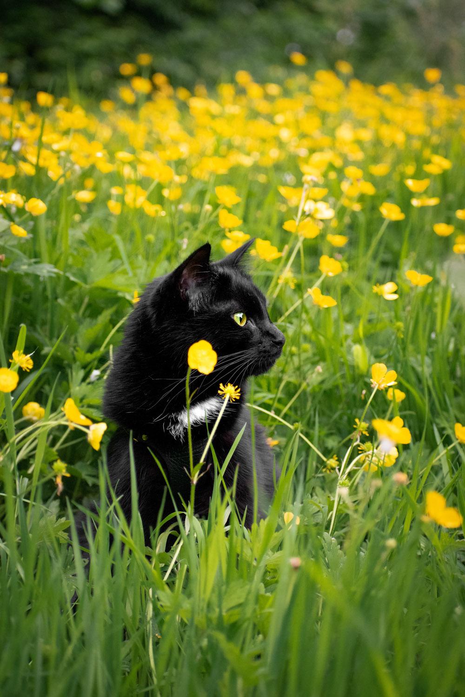 Mila yellow flowers