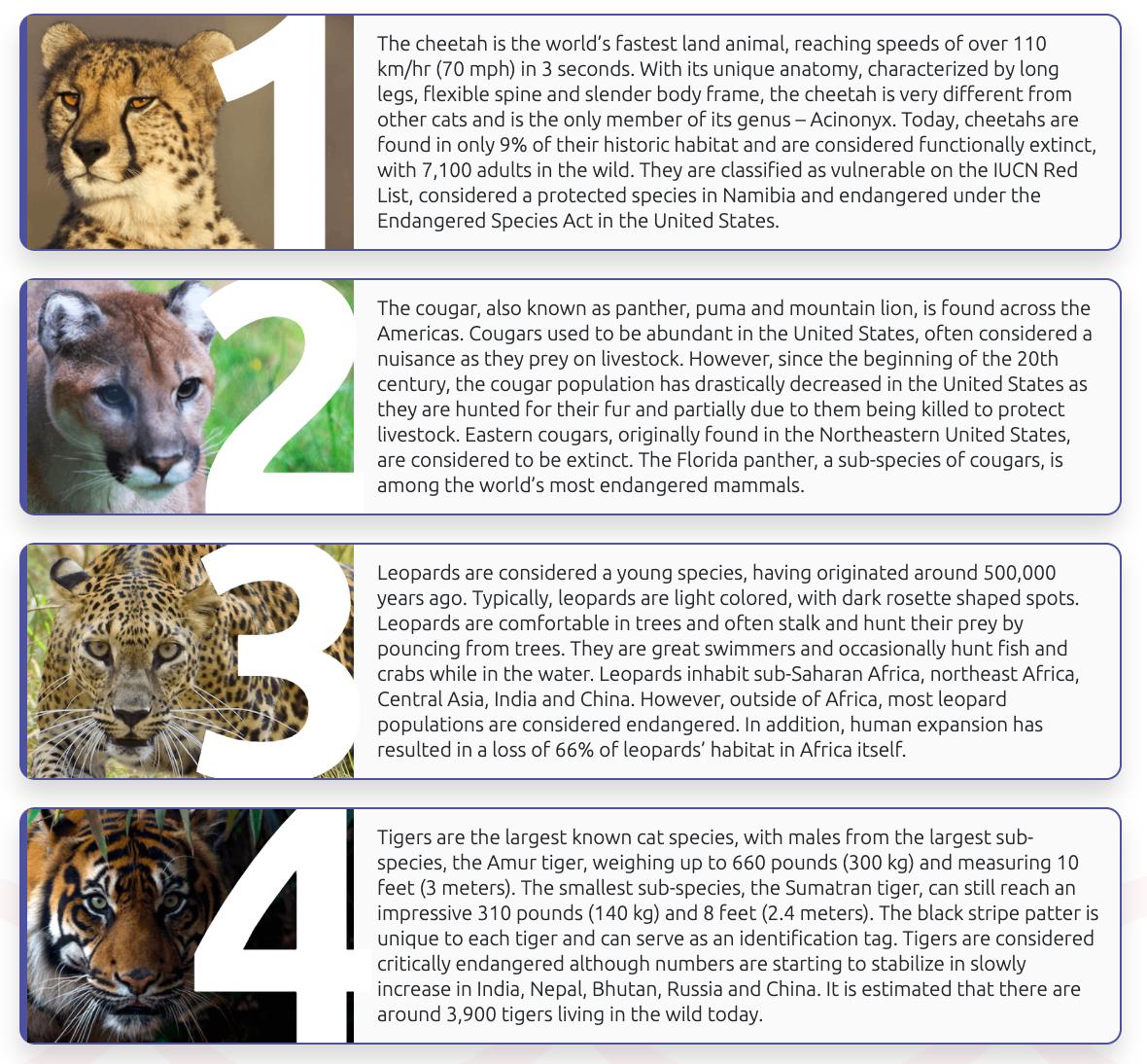 basepaws wildcat index